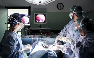 Sterilizzazione e gastropessi preventiva in laparoscopia