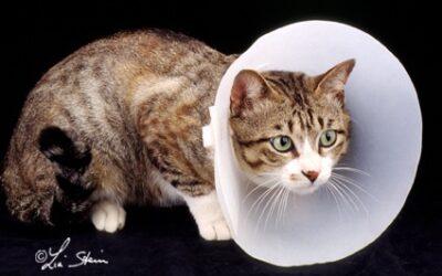 Che cosa può offrirvi il veterinario
