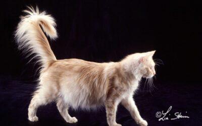 La gravidanza nella gatta