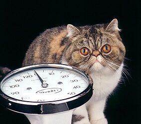 La prevenzione dell'obesità nel gatto