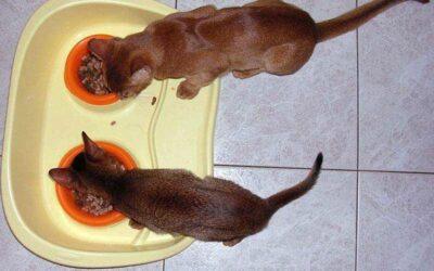 Alimentazione del gatto adulto